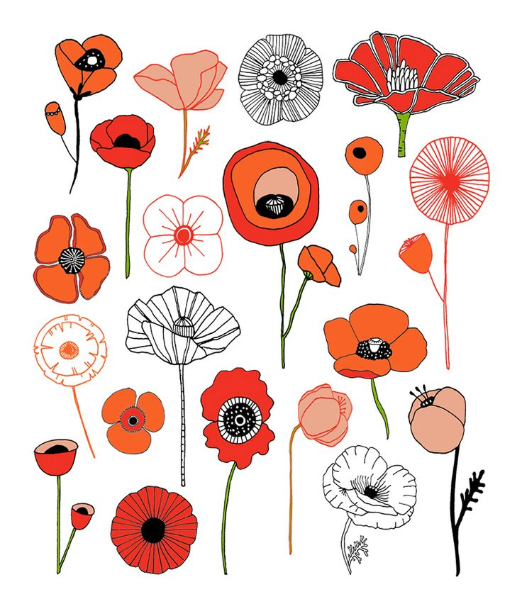 1000+ ideas about Poppy Drawing on Pinterest.