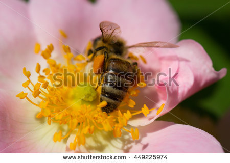 Bee Pasture Stock Photos, Royalty.
