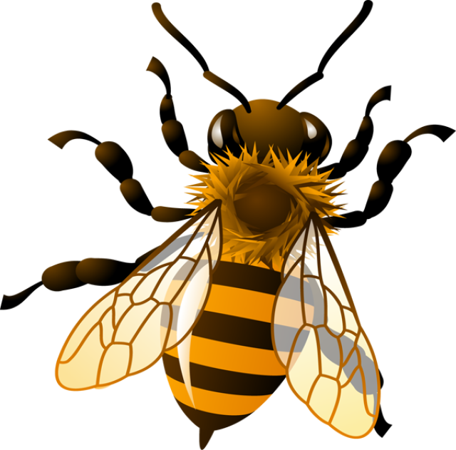 Honey Bee Drawing Clip Art at PaintingValley.com.