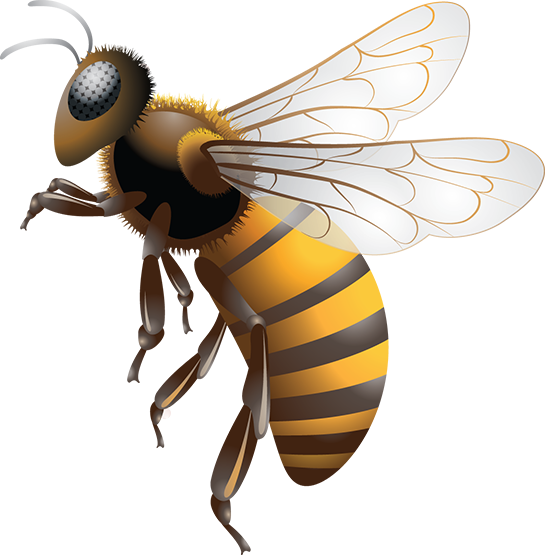 Bee PNG Images Transparent Free Download.