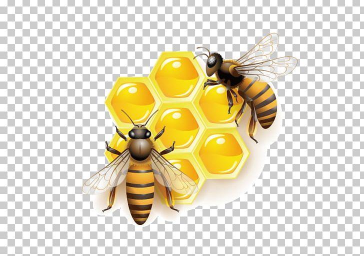 Honey Bee PNG, Clipart, Arthropod, Bee, Bee Hive, Bee Honey, Bee.