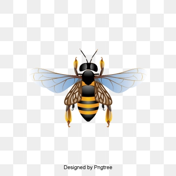 Bee PNG Images, Download 1,556 PNG Resources with Transparent Background.
