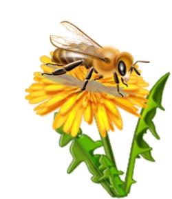 Cartoon Honey Bee Images.