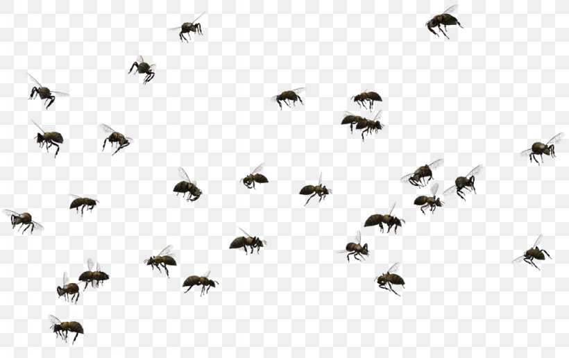 Honey Bee Swarming Insect Clip Art, PNG, 1024x645px, Bee.
