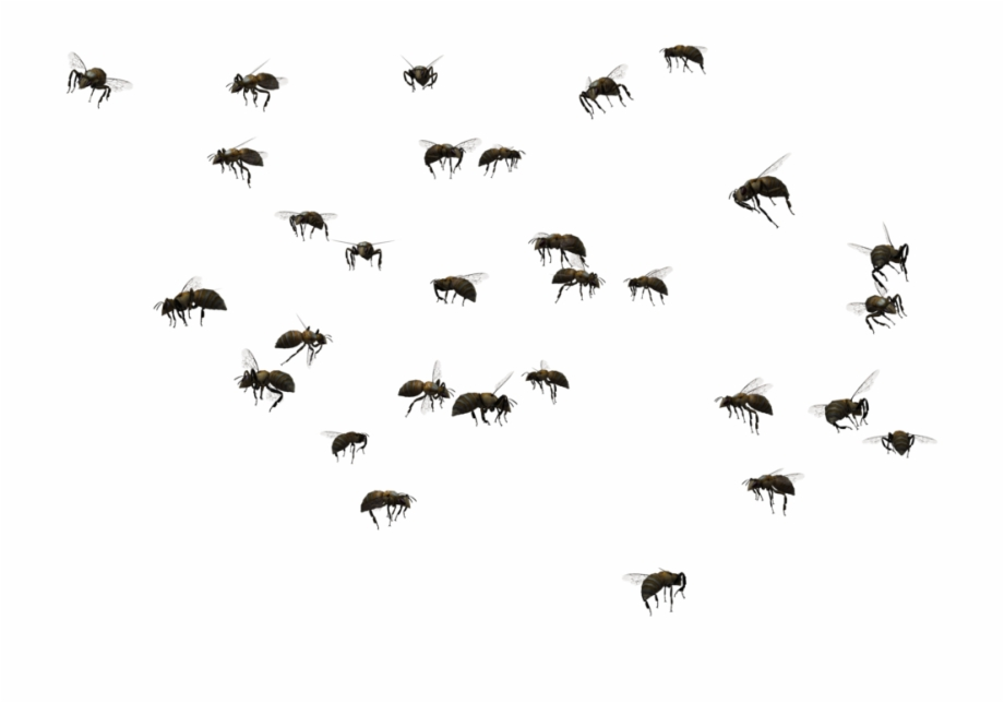 Vector Paths Bee Swarm Of Bees Png.