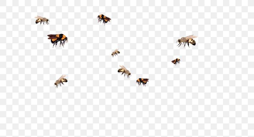 Insect Honey Bee Queen Bee Swarming Bumblebee, PNG.