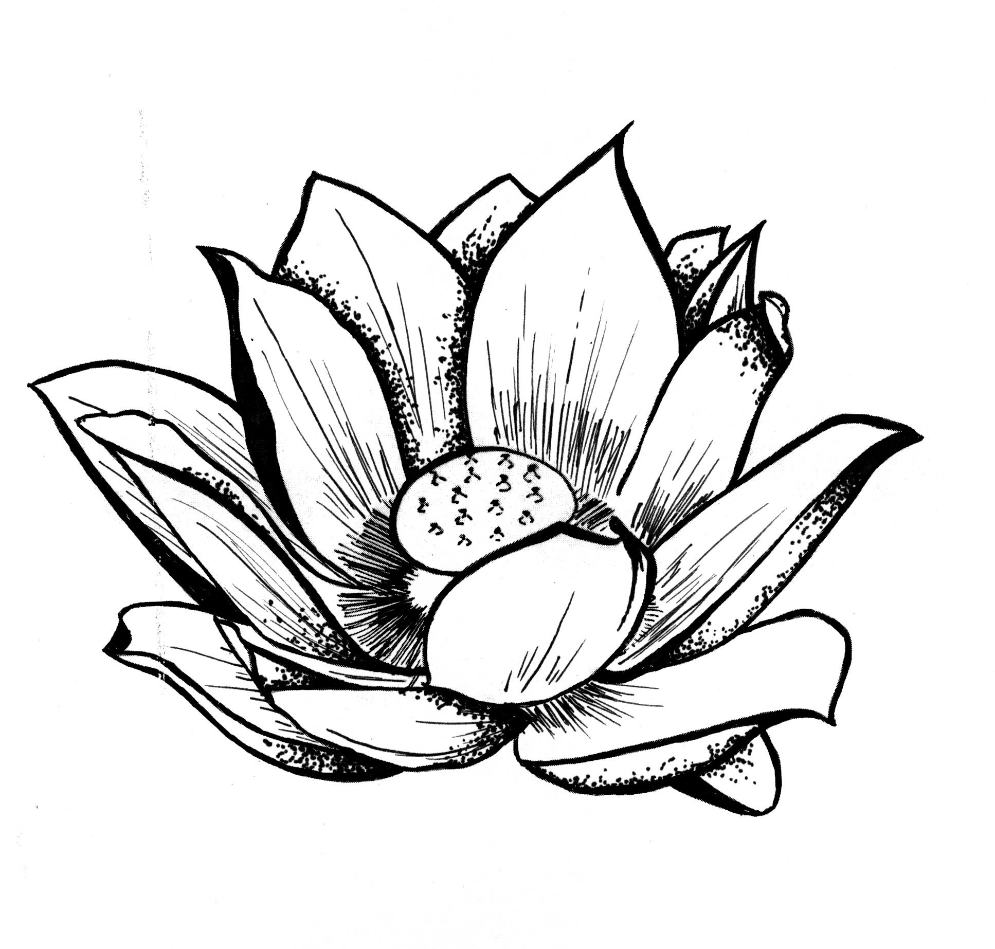 Lotus Flower Line Drawing.