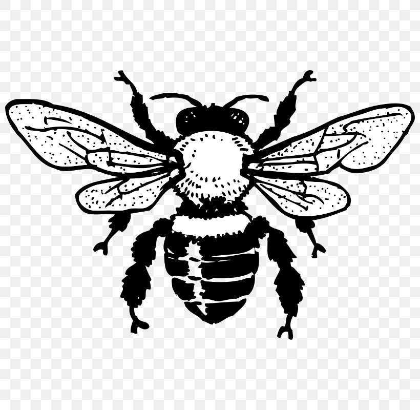 Honey Bee Queen Bee Black And White Clip Art, PNG, 800x800px.