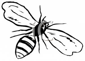 Black and White Bee With Wings Spread.