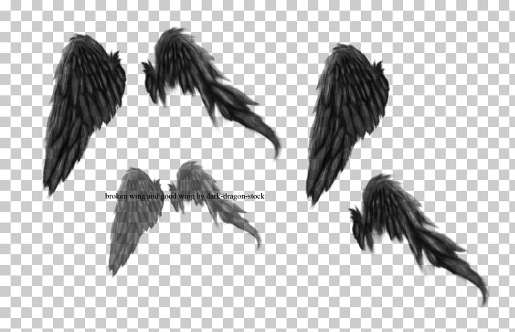 769 dark Wings PNG cliparts for free download.