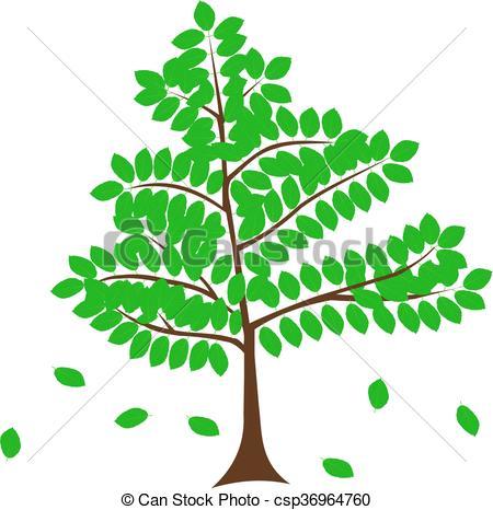 Clip Art Vector of deciduous tree, beech,vector, csp36964760.