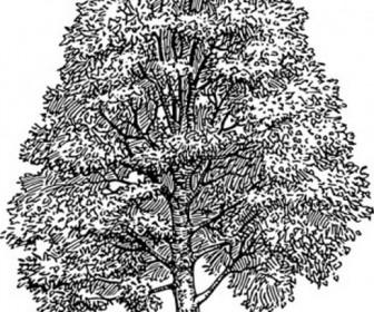 Tree Eps File.