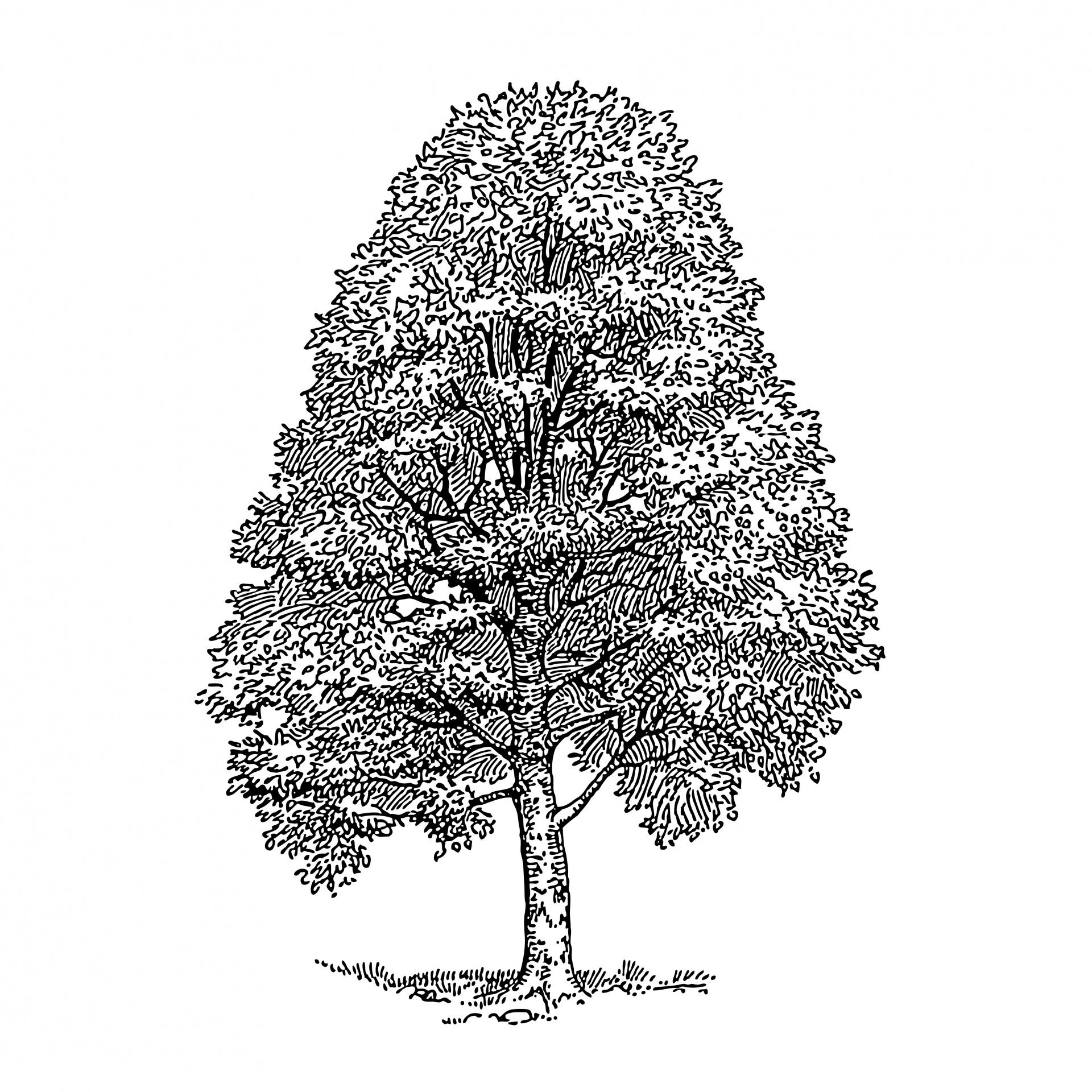 Tree Clipart Illustration Free Stock Photo.