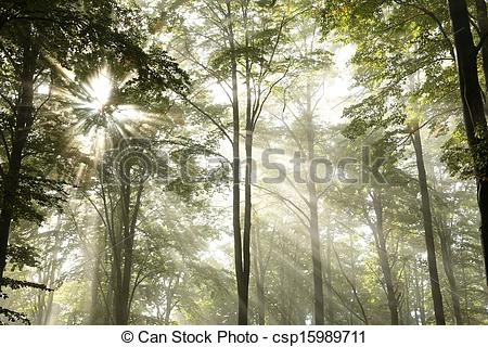Clipart of Autumn beech forest on a foggy morn.