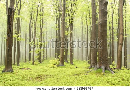 Spring Beech Forest Thick Trees Foreground Stock Photo 53917411.