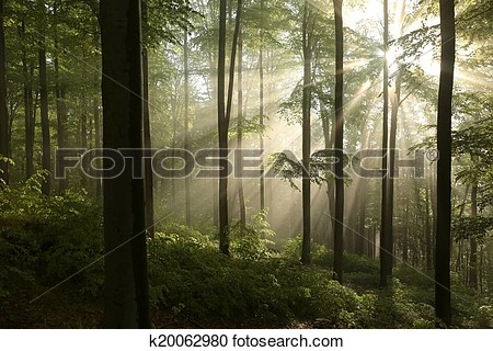 Forest wall mural clipart.