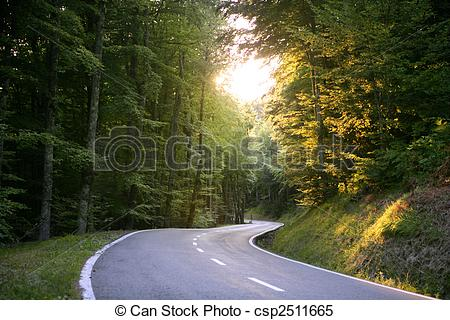 Stock Images of Asphalt winding curve road in a beech forest.