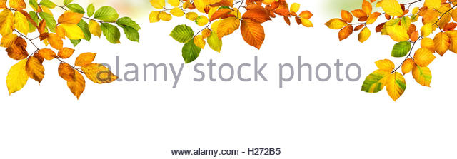Beech Leaf Cutout Stock Photos & Beech Leaf Cutout Stock Images.