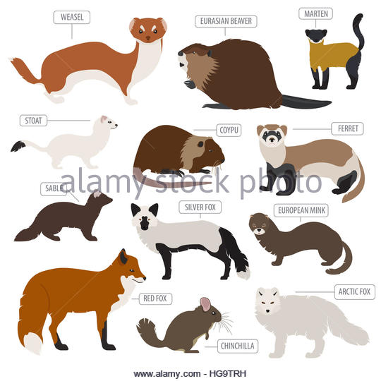 Marten Cut Out Stock Images & Pictures.