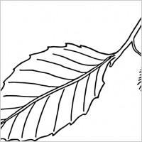 Beech Leaf Outline clip art.
