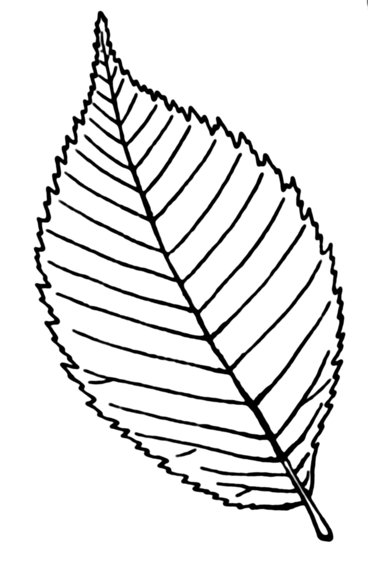 Drawing Leaf.