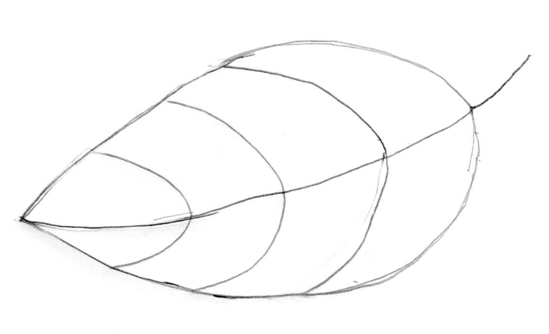 Oak Leaf Outline.
