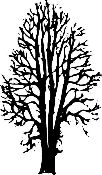Beech Tree Clip Art at Clker.com.