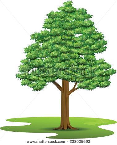 Beech tree clipart.