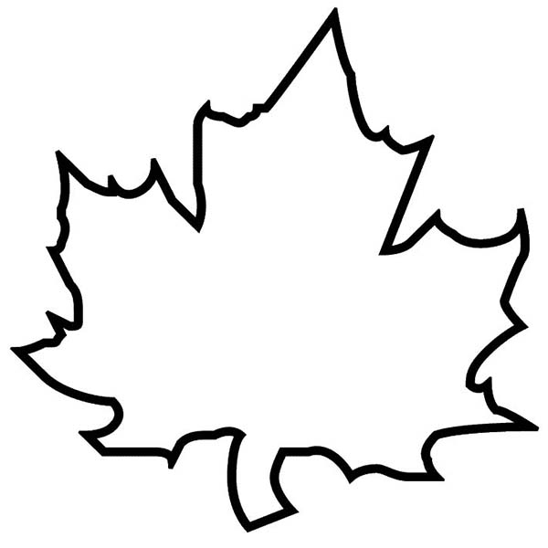 Tree leaf outline clipart.