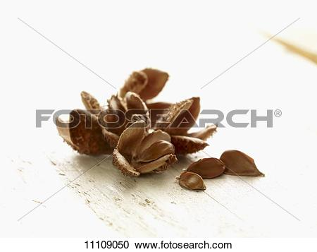 Stock Photography of Beech nuts on a wooden table 11109050.