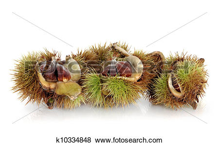 Pictures of Beech Nuts k10334848.