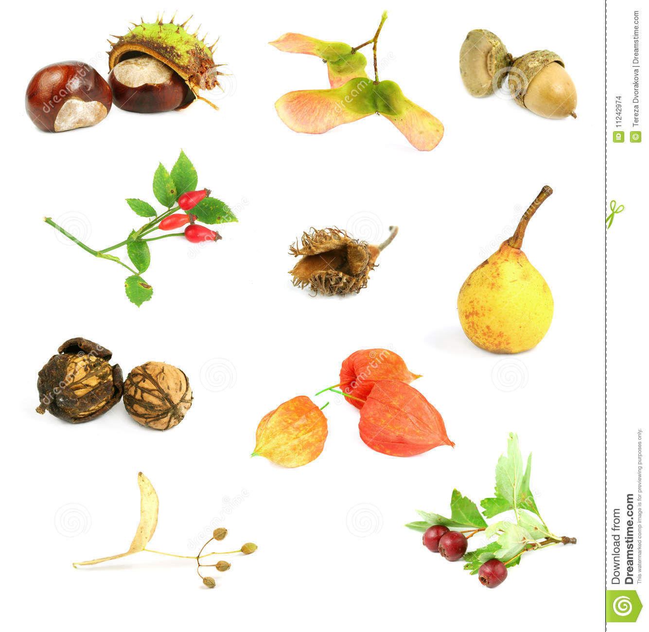 Autumn Nuts, Seeds, And Fruits Stock Images.
