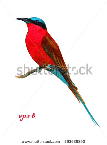 Blue Tailed Bee Eater Stock Vectors & Vector Clip Art.