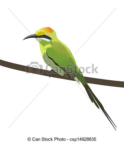 Drawings of Green bee eater.