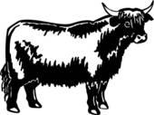 Clipart of , animal, breed, bull, charbray, cattle, u17582813.