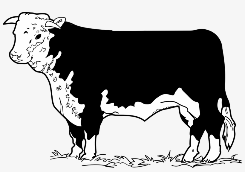 Beef Clipart Cow Drawing.