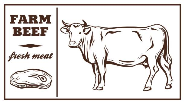 Top 60 Beef Cattle Clip Art, Vector Graphics and Illustrations.