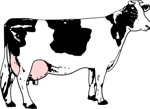 1000+ ideas about Images Of Cows on Pinterest.