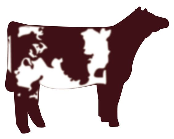 show heifer clip art.