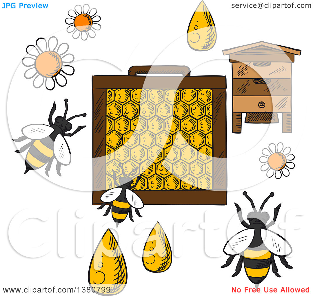 Clipart of a Sketched Beehive, Frame with Honeycombs and Bees.