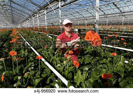 Stock Photography of Flower auction in Aalsmeer, a cooperative of.