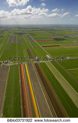 """Stock Photo of """"Tulip fields, aerial view, Noord."""