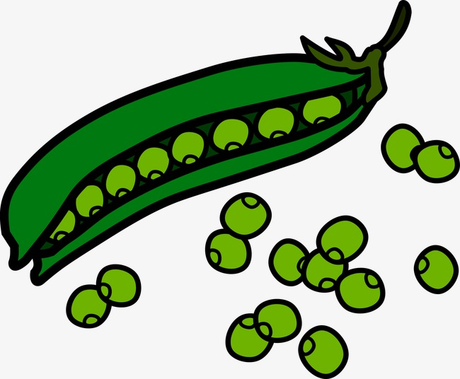 Beans clipart 6 » Clipart Station.