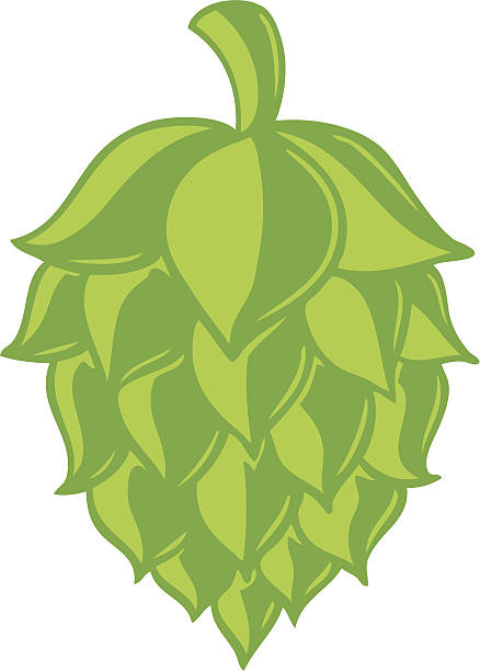 Best Hop Illustrations, Royalty.