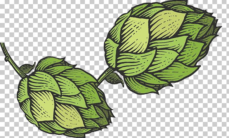 Beer Hops Common Hop Sketch PNG, Clipart, Beer, Beer Hops, Cider.