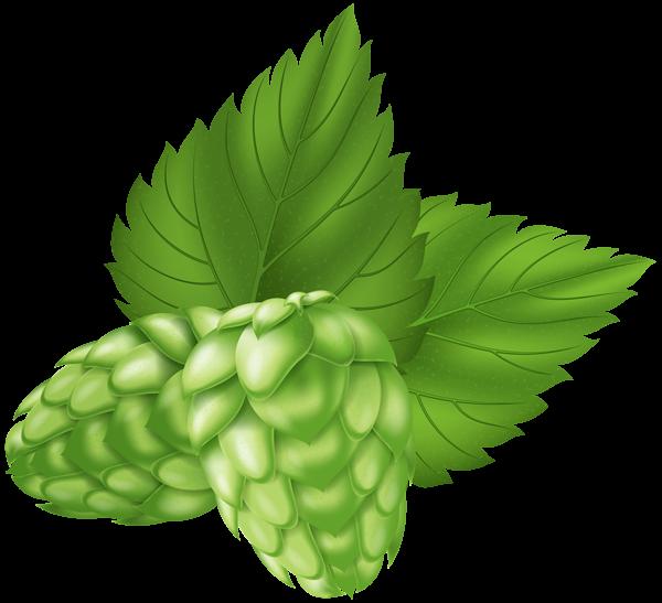 Beer Hops Plant PNG Clip Art Image.