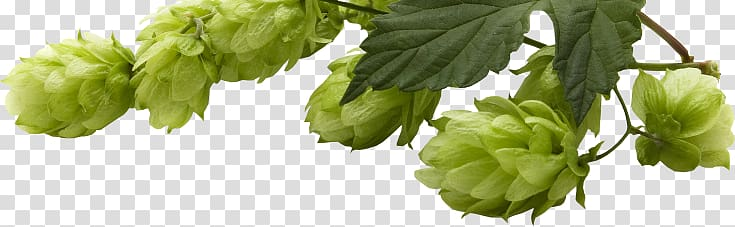 Beer Yakima Valley AVA Common hop Hops, beer transparent background.
