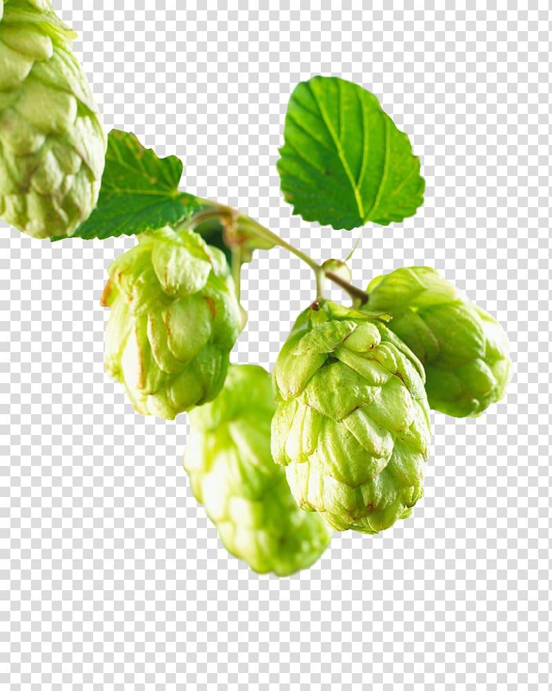 Green fruit, Beer Common hop Hops, Hops transparent background PNG.