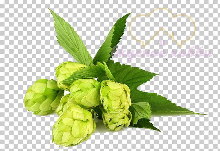 Beer Brewing Grains & Malts Beer Brewing Grains & Malts Hops Whiskey.