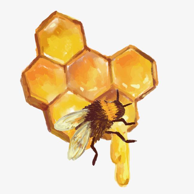Vector Bee Nest, Bee Vector, Bee Clipart #79340.